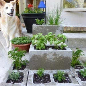 Urban Herb Garden on the Cheap